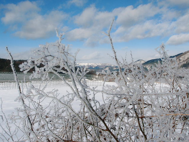 極寒でした。_a0256619_2302485.jpg