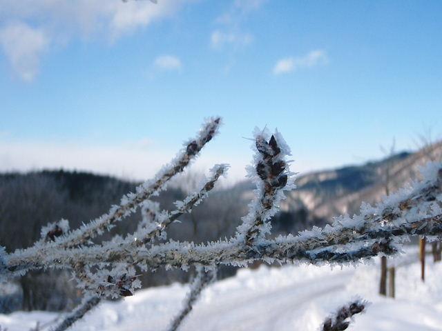 極寒でした。_a0256619_2315381.jpg