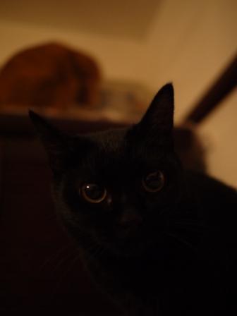 白黒つけない猫 ろった編。_a0143140_21141275.jpg