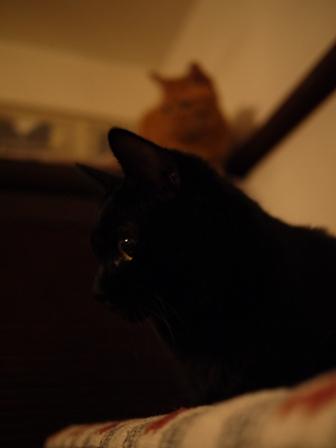 白黒つけない猫 ろった編。_a0143140_21154371.jpg