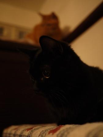 白黒つけない猫 ろった編。_a0143140_21163934.jpg