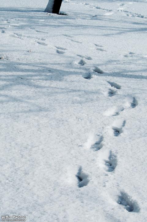 雪の降った翌日_d0214541_14512212.jpg