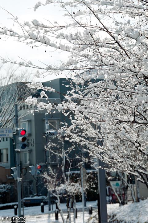 雪の降った翌日_d0214541_1454198.jpg