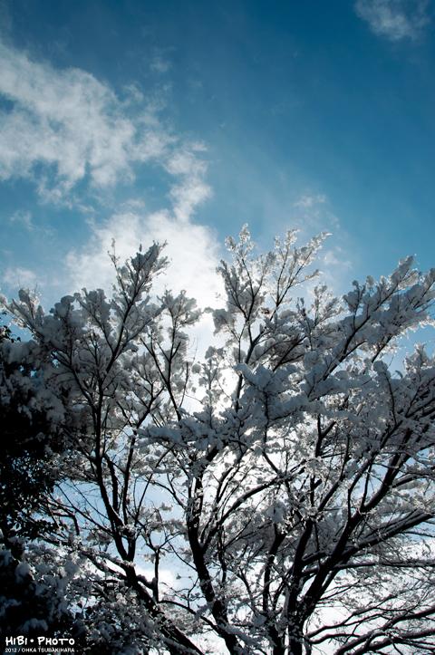 雪の降った翌日_d0214541_14593472.jpg