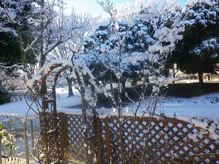 昨日は雪で大変・・・。_a0139242_530348.jpg
