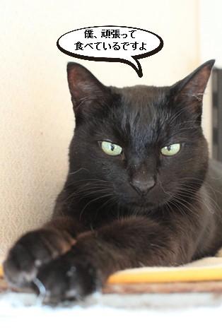 今日の保護猫さんたち_e0151545_21473019.jpg