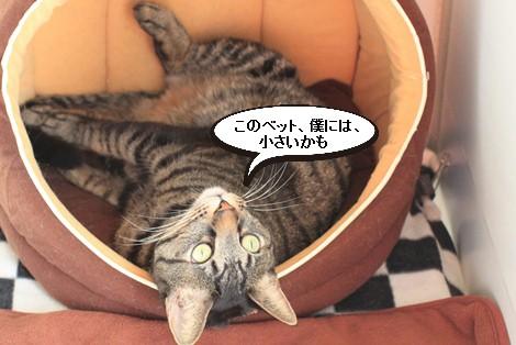 今日の保護猫さんたち_e0151545_21523051.jpg