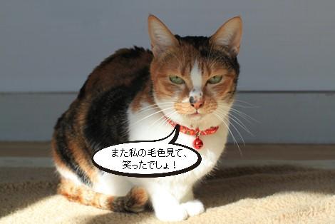 今日の保護猫さんたち_e0151545_2201795.jpg