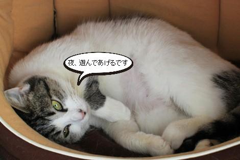 今日の保護猫さんたち_e0151545_223680.jpg