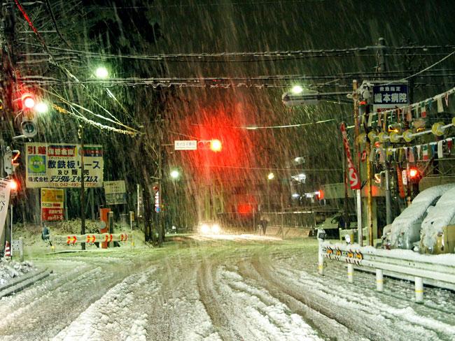 大雪に見舞われて_b0015157_0263299.jpg