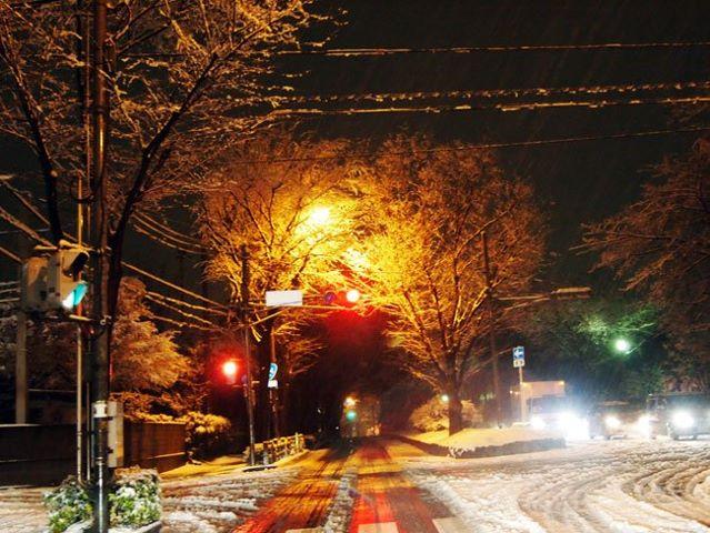 大雪に見舞われて_b0015157_0294484.jpg