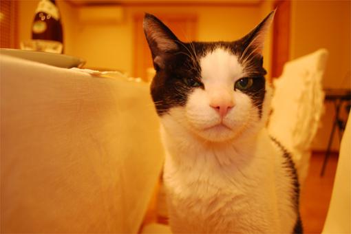 猫的人的HAPPYごはん♪_c0181457_1133143.jpg