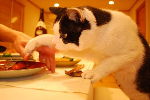 猫的人的HAPPYごはん♪_c0181457_11332812.jpg