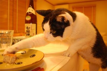 猫的人的HAPPYごはん♪_c0181457_11335151.jpg