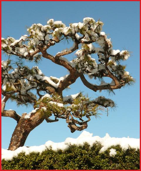 青山雪景色。いつもと同じ道なのに!_e0236072_11372529.jpg