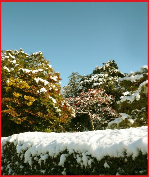 青山雪景色。いつもと同じ道なのに!_e0236072_11461641.jpg