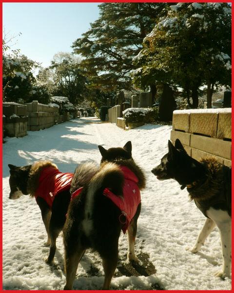 青山・雪の絶景。_e0236072_13254125.jpg