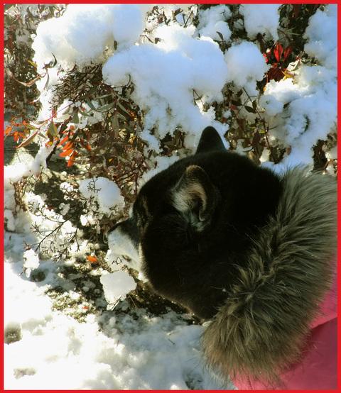 青山・雪の絶景。_e0236072_13295910.jpg
