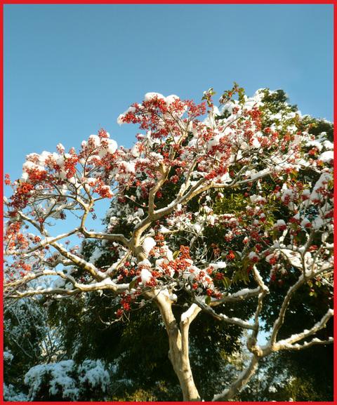 青山・雪の絶景。_e0236072_1333017.jpg