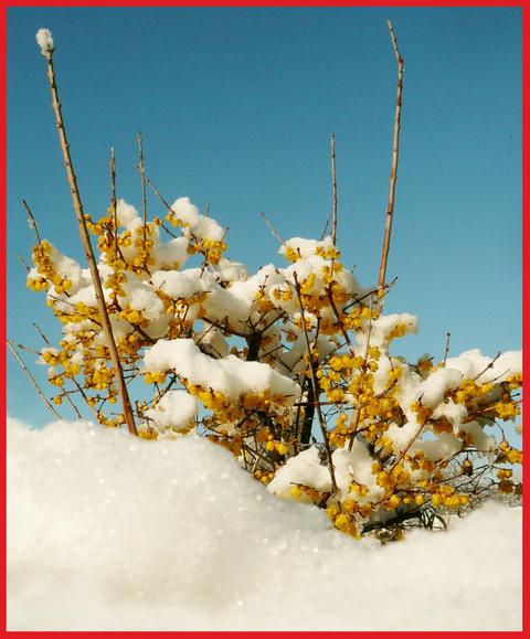 青山・雪の絶景。_e0236072_13344483.jpg