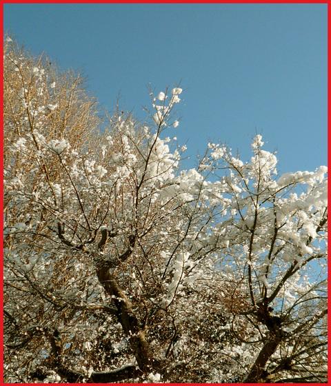青山・雪の絶景。_e0236072_1336148.jpg