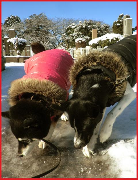 青山・雪の絶景。_e0236072_13402535.jpg