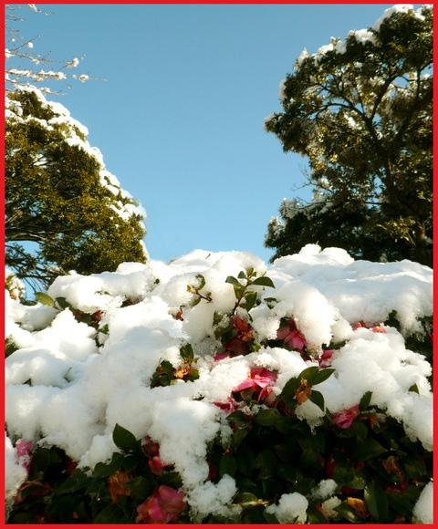 青山・雪の絶景。_e0236072_14383880.jpg