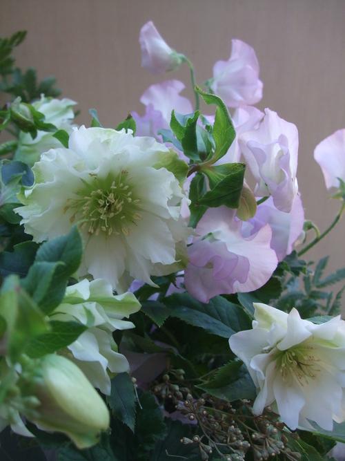 オークリーフ(八重咲きクリスマスローズとスイートピー・モネのアレンジメント)_f0049672_1884653.jpg