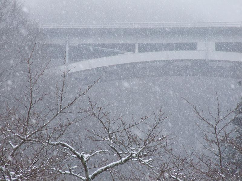 雪桜_b0188175_1963350.jpg