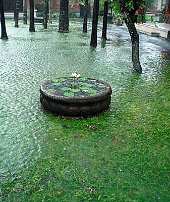 Rainy season_b0195783_15592463.jpg
