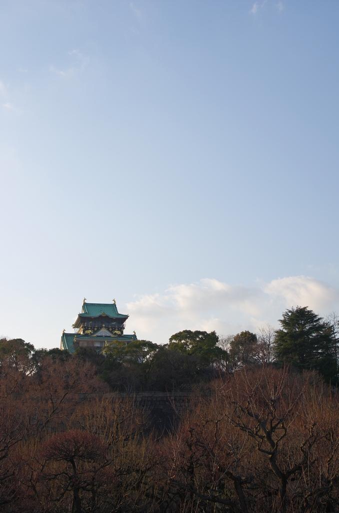 「大阪城公園、梅林から、、」_a0133692_20531532.jpg