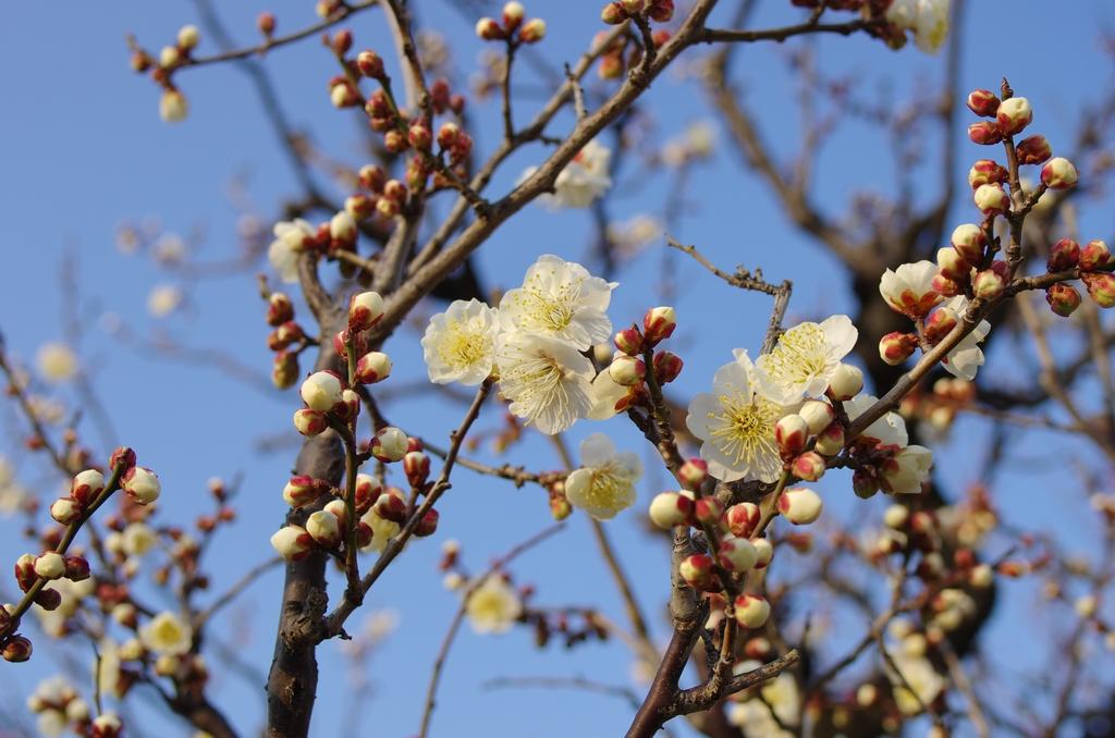 「大阪城公園、梅林から、、」_a0133692_2054495.jpg