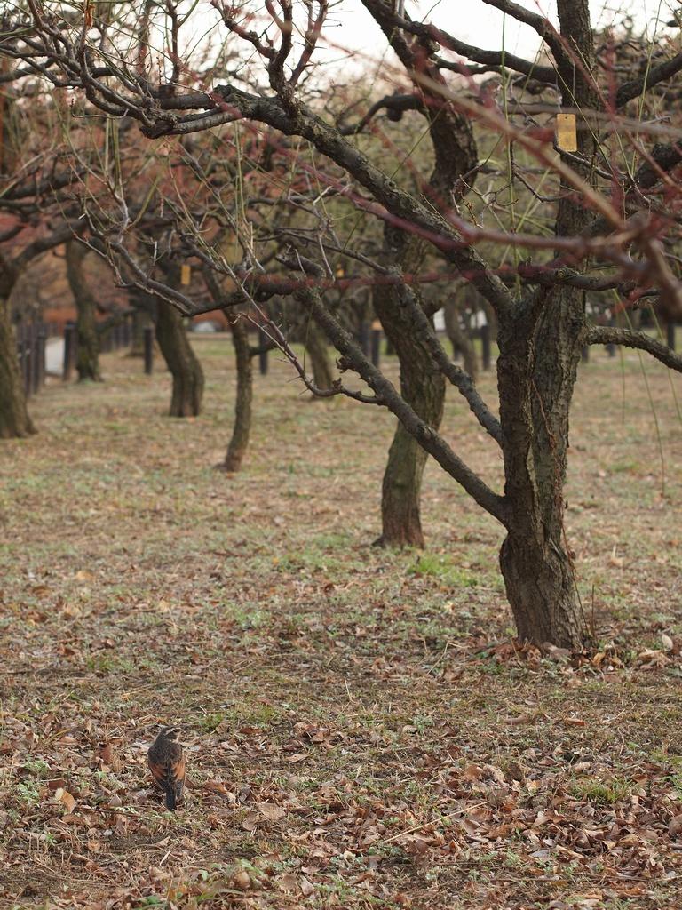 「大阪城公園、梅林から、、」_a0133692_2102141.jpg