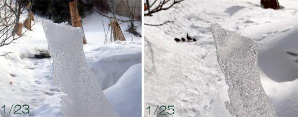 この冬4回めの雪下ろしと、雀ちゃん_a0136293_17312662.jpg