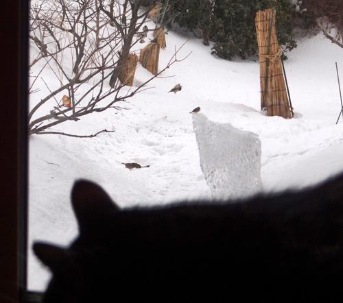 この冬4回めの雪下ろしと、雀ちゃん_a0136293_17355848.jpg