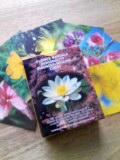 花カードのレッスン★_e0192203_101374.jpg