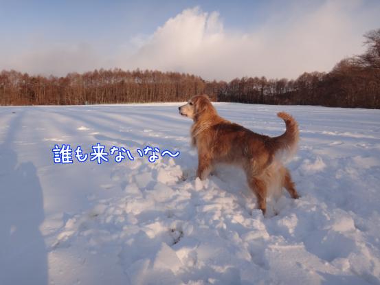 えっちゃんの雪上レスリング_f0064906_18182813.jpg