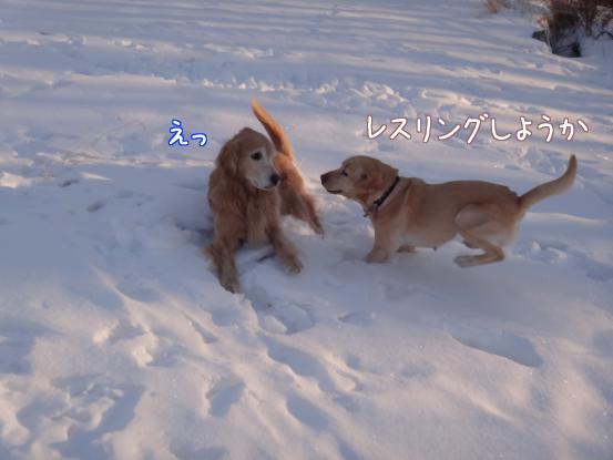 えっちゃんの雪上レスリング_f0064906_18195079.jpg