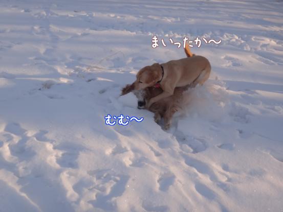 えっちゃんの雪上レスリング_f0064906_18202369.jpg