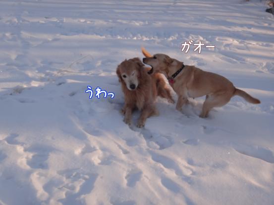 えっちゃんの雪上レスリング_f0064906_1820453.jpg