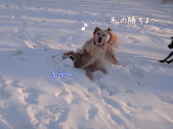 えっちゃんの雪上レスリング_f0064906_18205135.jpg