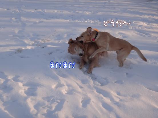 えっちゃんの雪上レスリング_f0064906_1820896.jpg