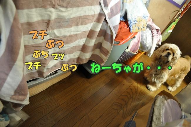 b0067012_039749.jpg