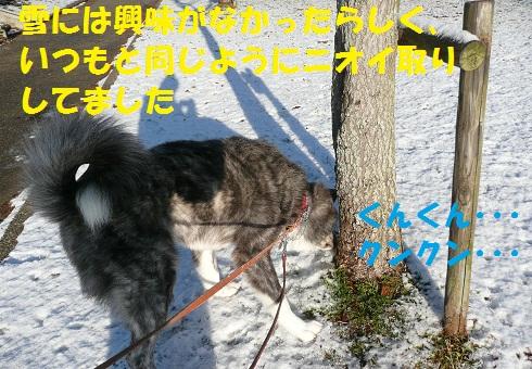 f0121712_14413796.jpg