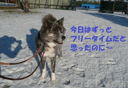 f0121712_14475741.jpg