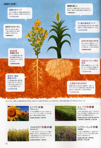 「趣味の園芸 やさいの時間」(NHK出版)2012年2月号 「初めての緑肥」内のイラストを描きました。_f0134538_845437.jpg