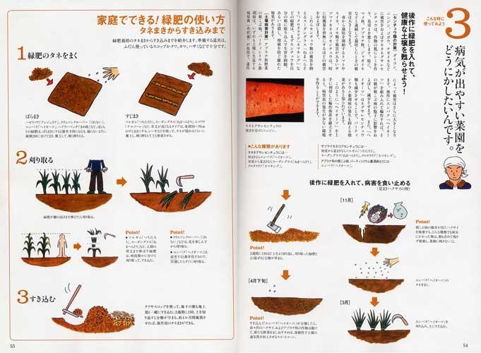 「趣味の園芸 やさいの時間」(NHK出版)2012年2月号 「初めての緑肥」内のイラストを描きました。_f0134538_85186.jpg