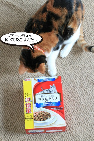 今日の保護猫さんたち_e0151545_21395296.jpg