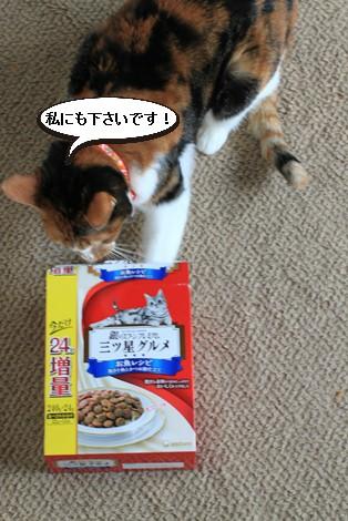 今日の保護猫さんたち_e0151545_21421616.jpg