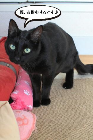 今日の保護猫さんたち_e0151545_21451592.jpg